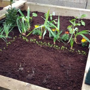 Sarah getting creative with her raised beds