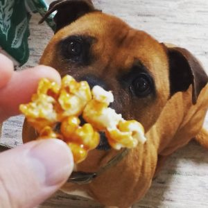 Digby and I finally have something in common. A love of caramel popcorn