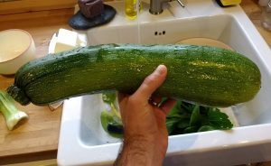 Proud of our courgette. It's more like a marrow